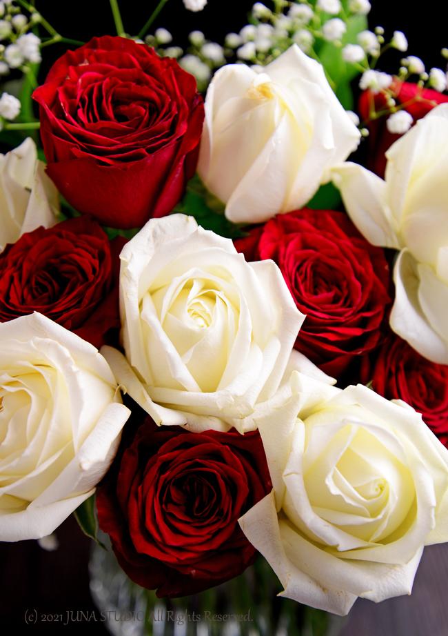 rose06212