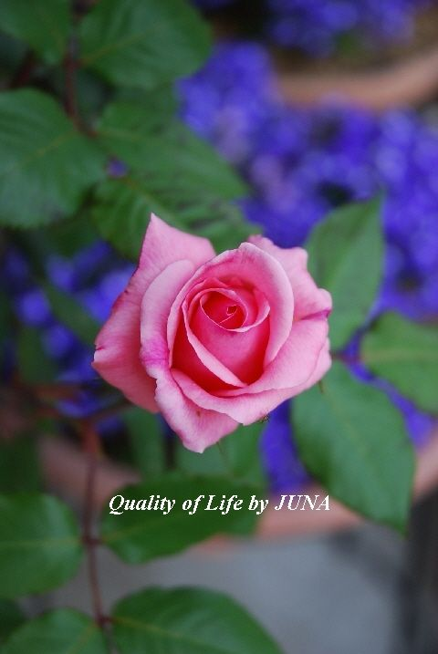 Quality of Life by JUNAとは
