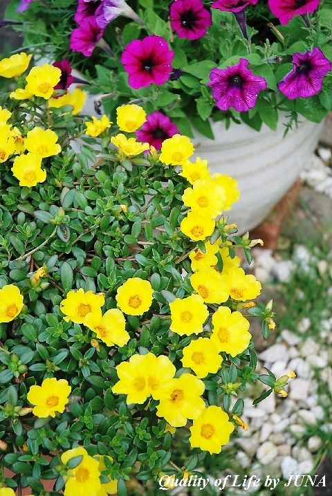梅雨明け、そして、夏の花 満載!!