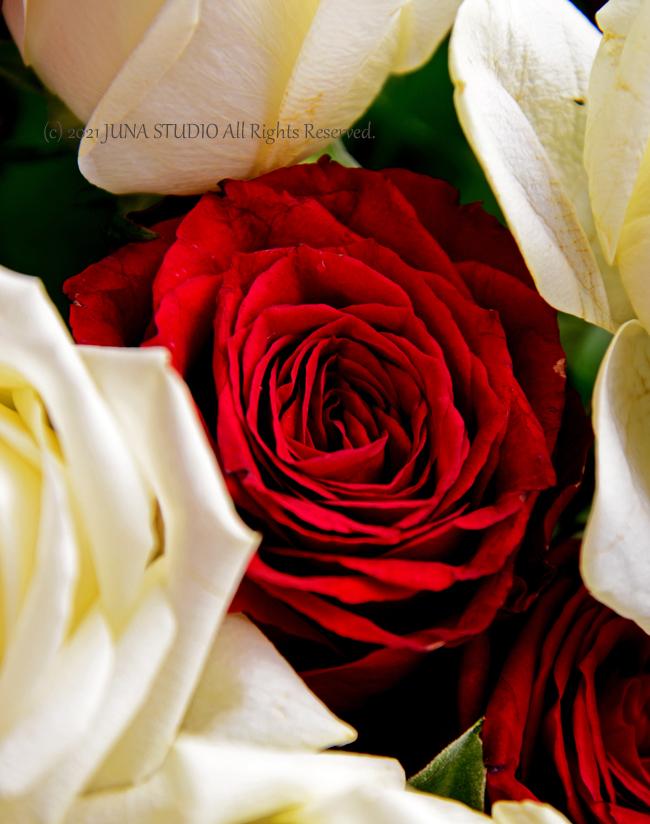 rose06213