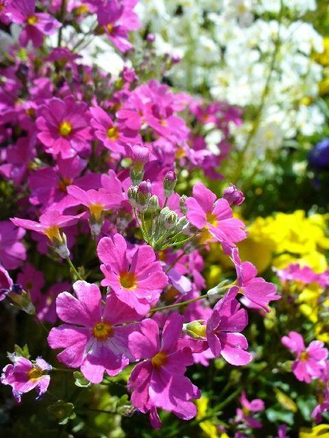 我が家の春庭~お花満開です☆~
