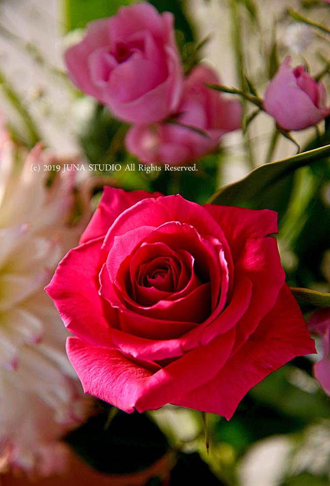 rose02191