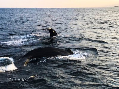 クジラ4005