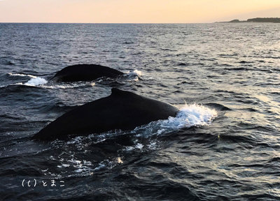 クジラ4006