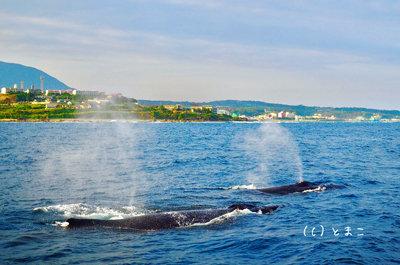クジラ4002