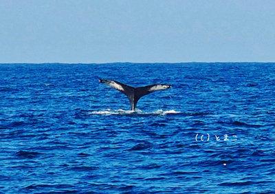 クジラ4004