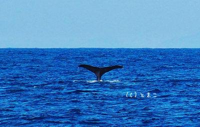 クジラ4003