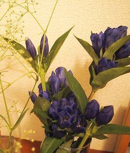 flower20140625a