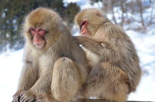 猿 毛づくろい