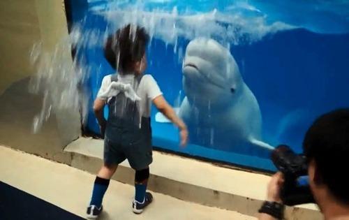 シロイルカによる噴霧を浴びた少年