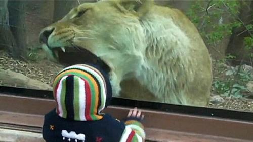 ライオン 赤ちゃん