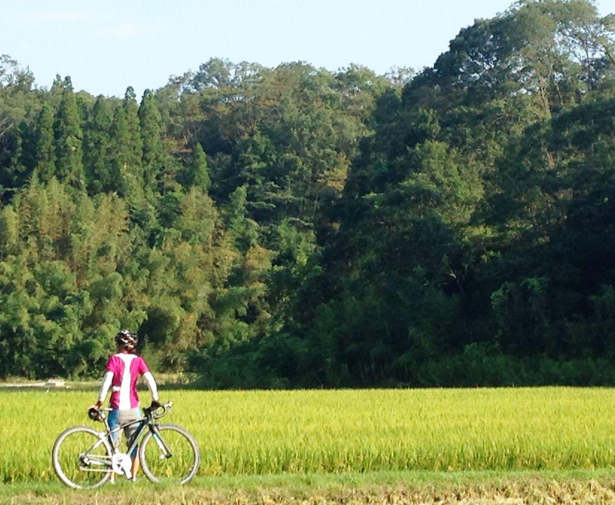 自転車の 自転車バイク トモス : バイク・マウンテンバイク ...