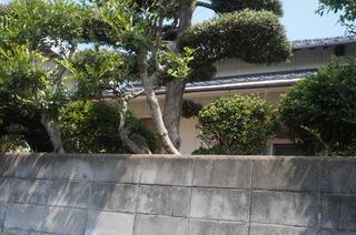 19湯堂・後生の桜のあった家