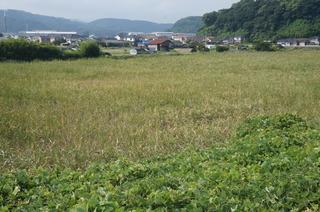 04塩田跡(左奥にチッソ旧工場)