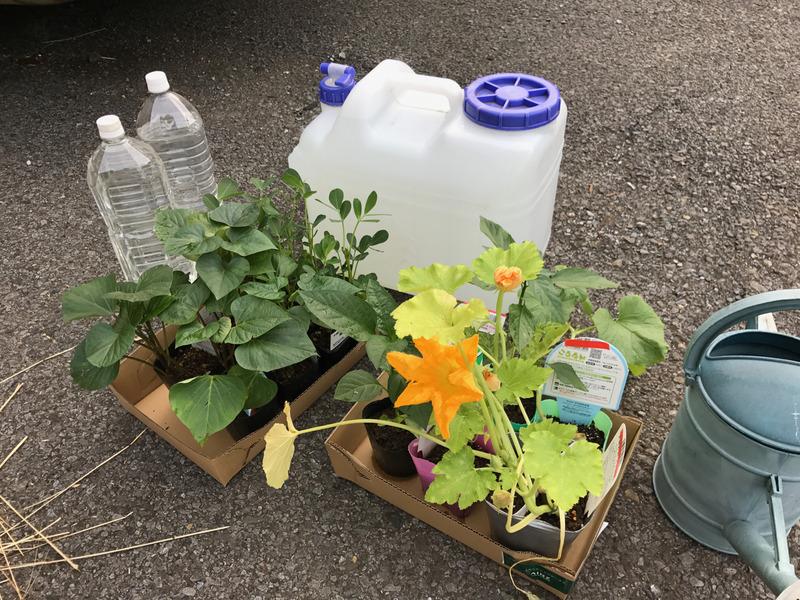 野菜の苗をたくさん植えてきました!