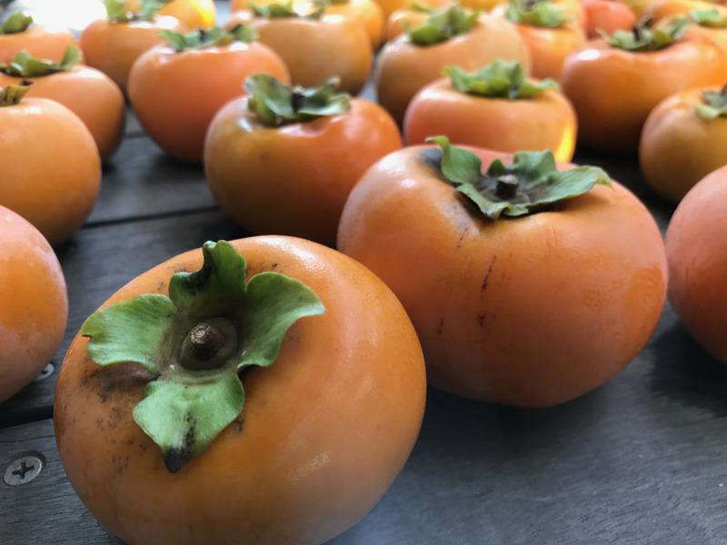 庭の柿を収穫!