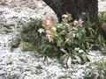 2月10日初雪