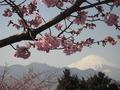 富士山と桜 2