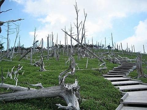 大台ケ原 立ち枯れの樹木 写真