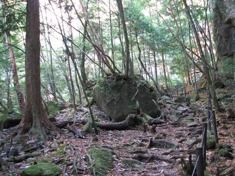 笹の滝 道中の写真