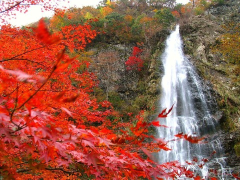 天滝 紅葉シーズン