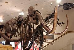 恐竜とたわむれた後は福島の豚料理居酒屋で決まり