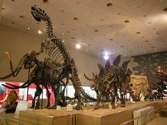 大阪市立自然史博物館で太古の生物を学ぶ