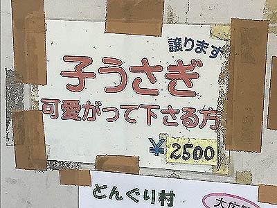 IMG_1338-yy-yy