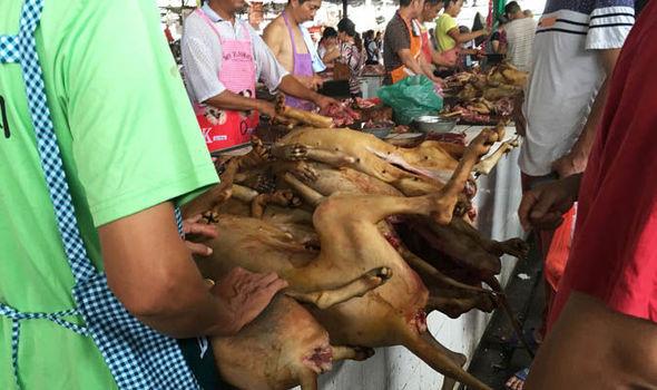 中国で今年も「犬肉祭」、韓国で犬食禁止に向かうも予定通り開幕