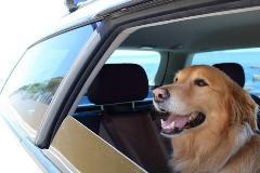 車内に犬6匹放置して全滅 「動物虐待」では?