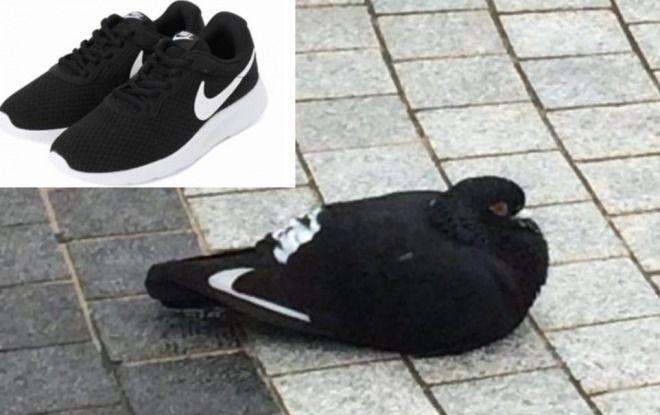 【話題】まるでNIKEのシューズみたいな鳩が発見される!衝撃的な写真に7万リツイート!