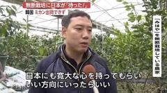 日本品種のミカンが韓国で無断栽培で「待った!」 出荷できず