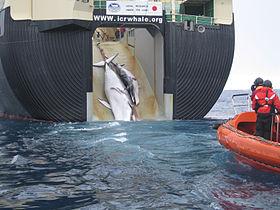 【捕鯨】日本のIWC脱退に相次ぐ批判コメントの内容がヤバすぎワロえない・・・