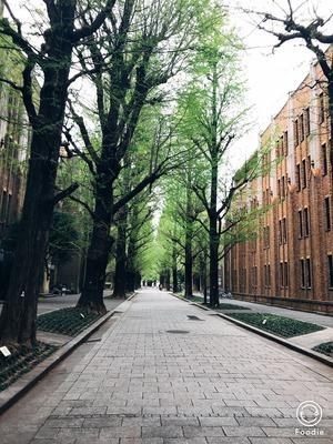 東京大学の外