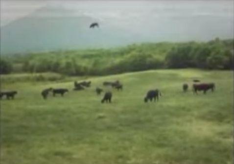 牛がUFOにさらわれる瞬間が撮影される3