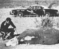 牛がUFOにさらわれる瞬間が撮影される8
