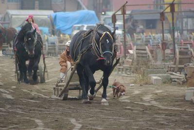 ばん馬と犬02