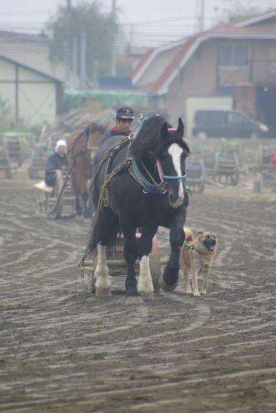 ばん馬と犬03