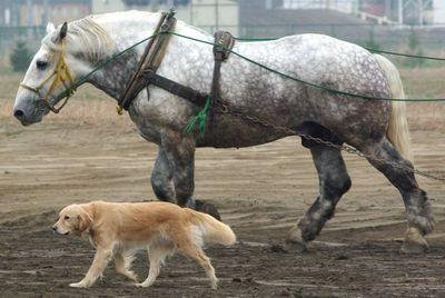 ばん馬と犬