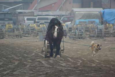 ばん馬と犬04