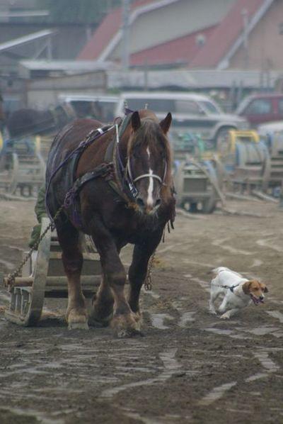 ばん馬と犬01