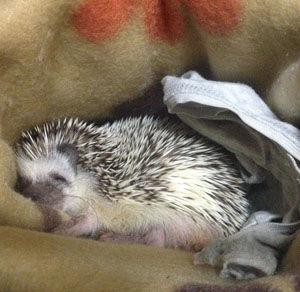 寝るヨッチー