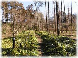 matano-forest