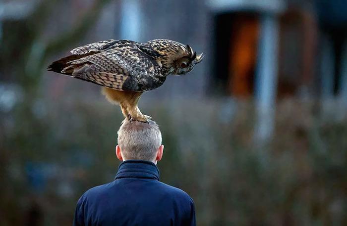 owllandsonheadnetherlandsnoordeinde2