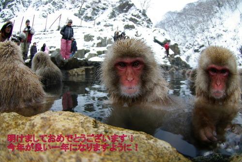 1-2009年01月02日地獄谷野猿公園 157