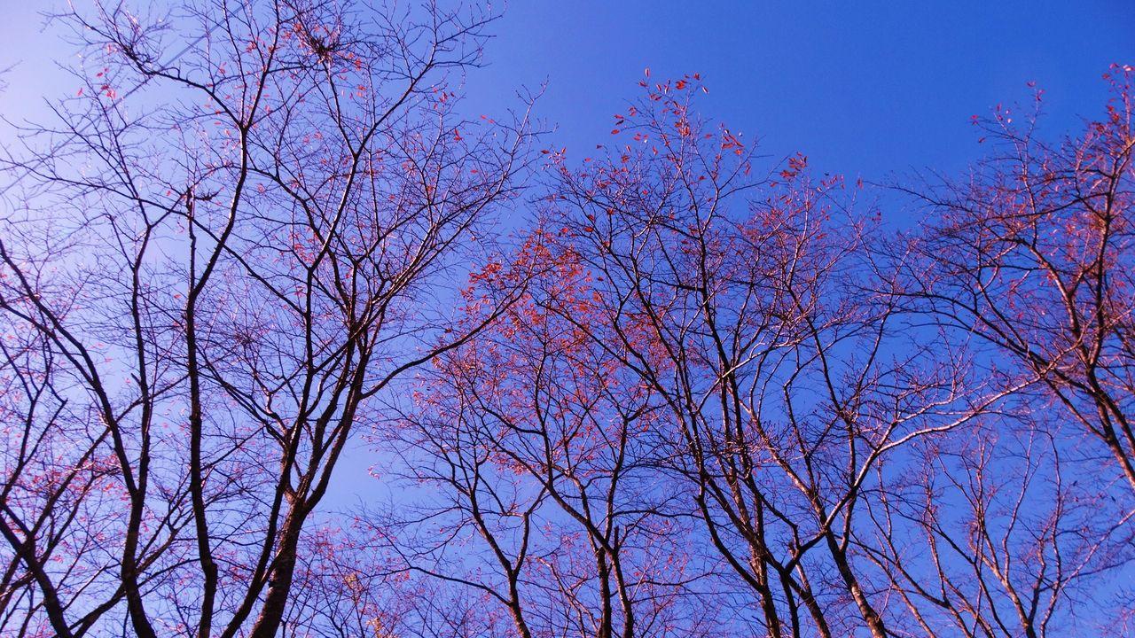 秋壁紙・木枯らし