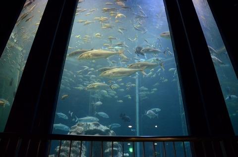 足摺海洋館大水槽