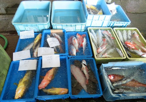 佐喜浜釣り魚