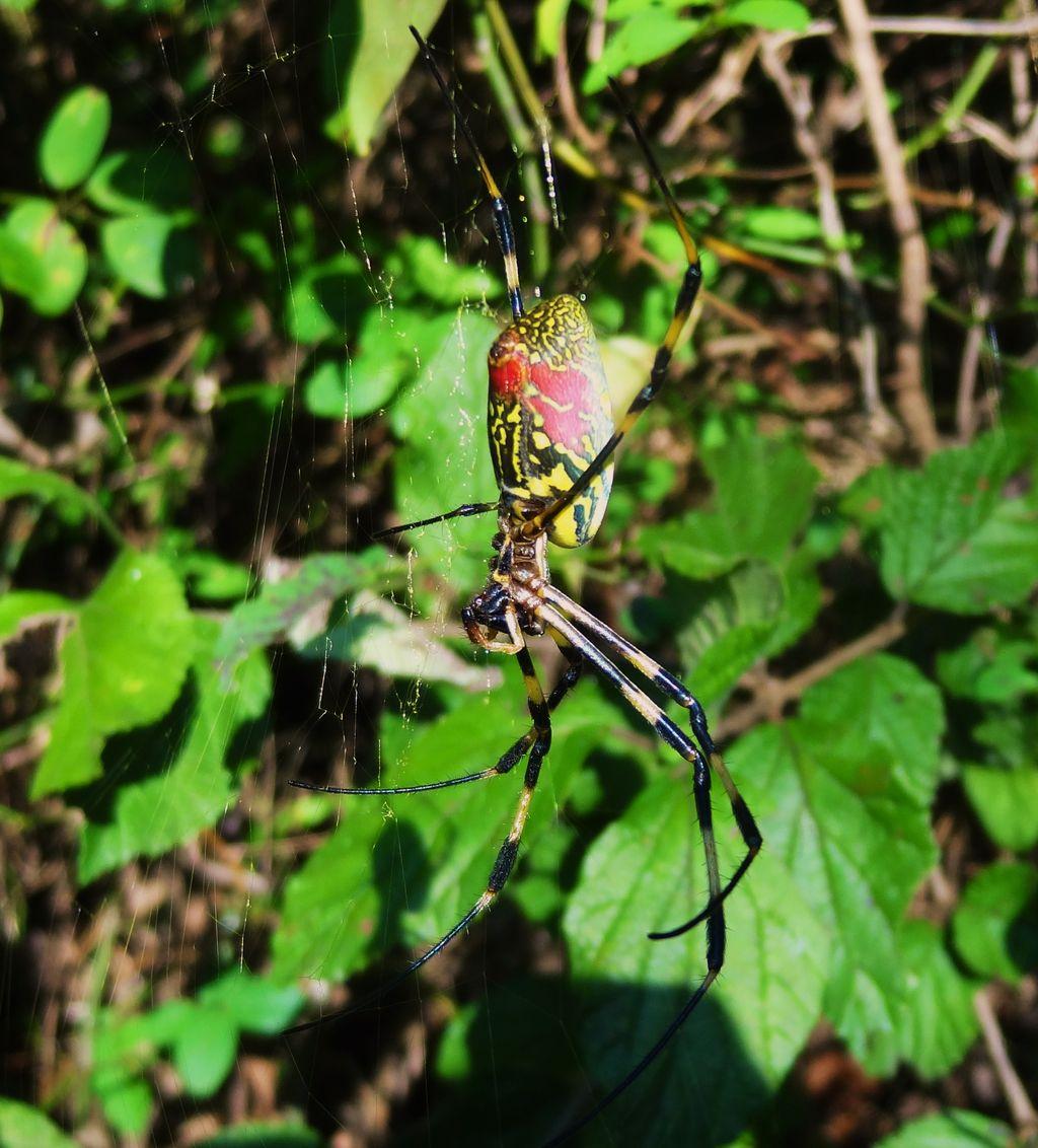 2013年11月26日 ザトウムシ 謎の節足動物梶ヶ森の管理林で見つけた生物。分かりますか?本近