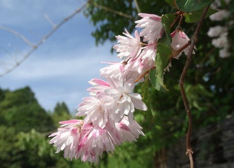 更紗空木八重桃色